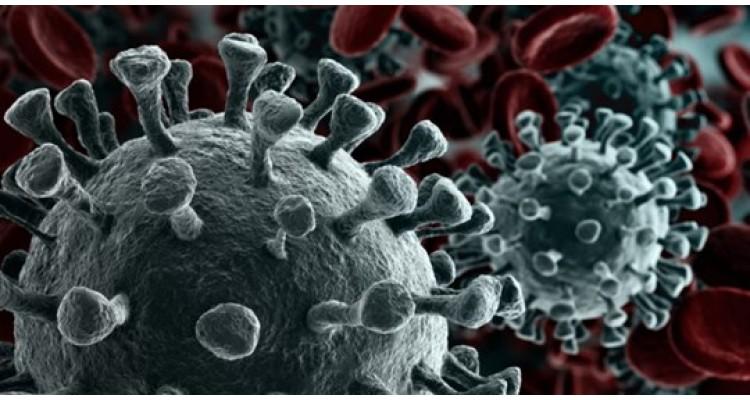 covid19-corona virus